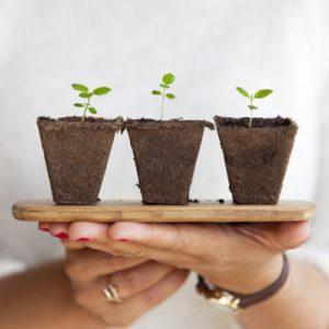 How to Start an Urban Garden
